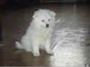 New_puppy_1