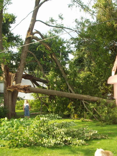 072108_storm_damage_tree_2